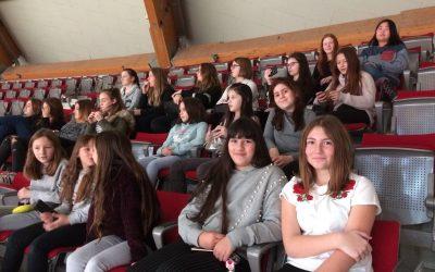 Amadeus Horse Indoors (1b)